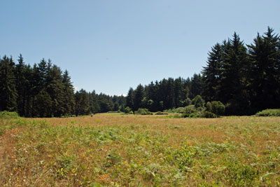 meadow at Patrick's Point State Park, Humboldt County, CA
